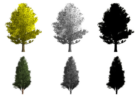 rendering di due diversi tipi di alberi e ombre Archivio Fotografico