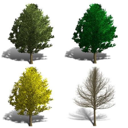 four season: ginko biloba tree rendering showing four season and shadows Stock Photo