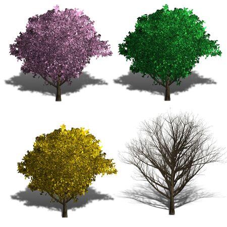 four season: japanese cherry rendering showing four season and shadows