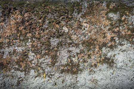old moss texture on a ancient wall Stock Photo