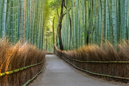green Bamboo forest path in japan Stock Photo