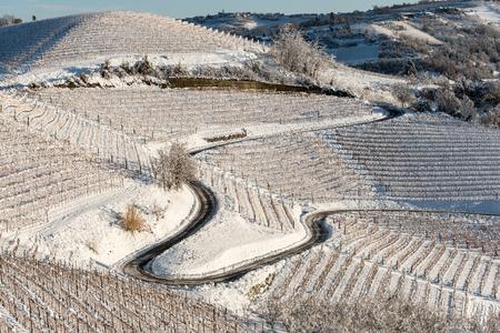 vineyards in Langhe region, northern italy, under snow