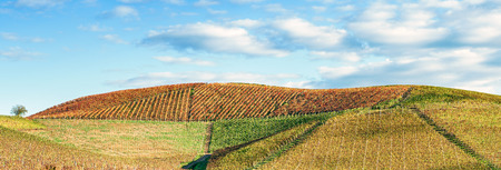 wide angle panorama fo Langhe hills in autumn 版權商用圖片