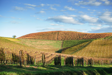 wide angle panorama fo Langhe hills in autumn heritage in northern italy 版權商用圖片