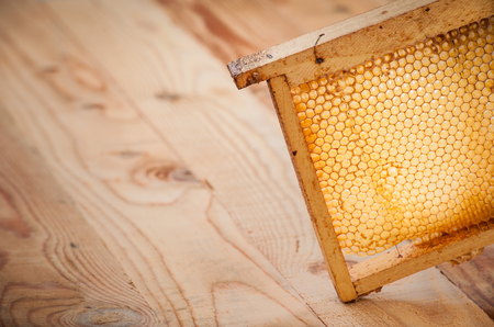 honey comb with honey made from bees