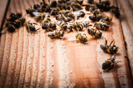 dead bees on wooden boards 스톡 콘텐츠