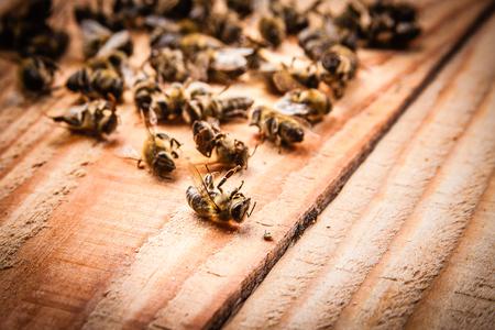 木製の板の上に死んだミツバチ
