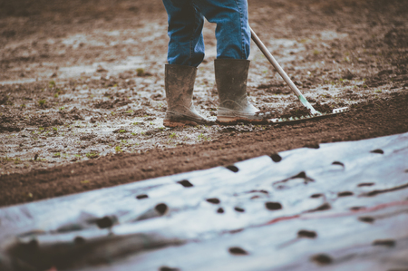farmer with rake prepares the ground and the mulching towel in the spring