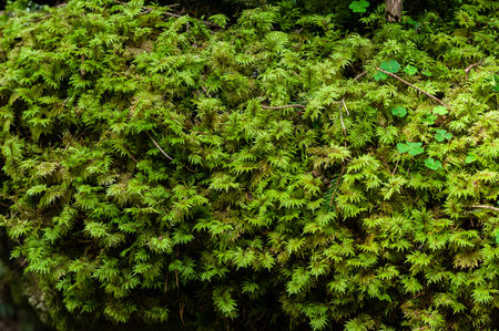 moss in the alpine forest textures