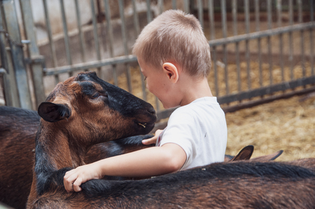a child plays, cuddles and has fun with goats Zdjęcie Seryjne