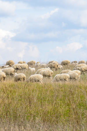 italian landscape: Italian landscape of cuntryside near rome with sheeps Stock Photo