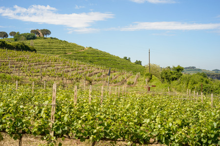 docs: Italian Vineyard in spring in countryside of Rome Stock Photo