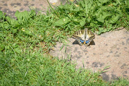 the color of silence: A nice butterfly resting over the grass in the garden