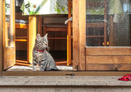 animal watching: cat watching outside the garden focusing on a bird