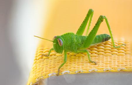 hopper: a nice little green hopper on a deckchair
