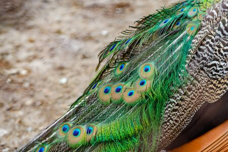 particular of a colorful peacock tail 版權商用圖片 - 95757209
