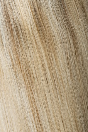 Rear view of blonde hair