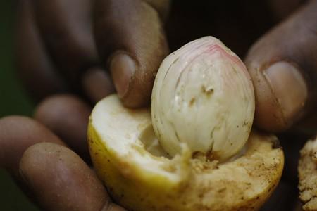 Close-up of hand with nutmeg, Kerala, India photo