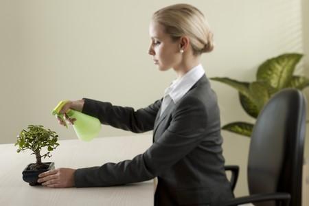 bonsai tree: Businesswoman watering her bonsai tree