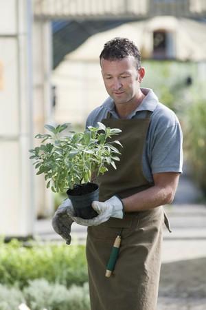 Gardener in a green house photo