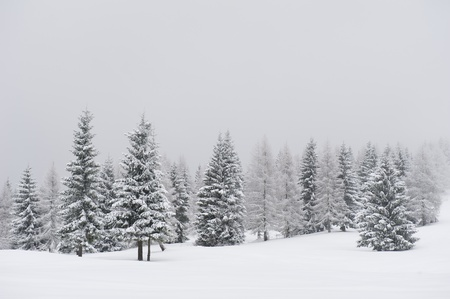 winterday: Beautiful winter landscape with trees covered in snow Stock Photo