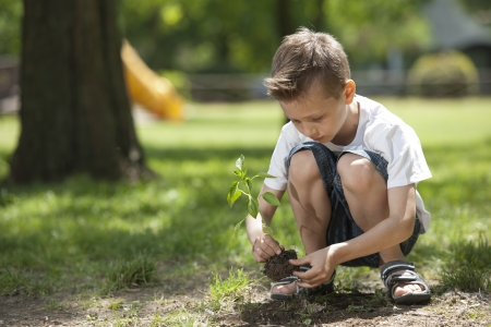 dug: Little boy planting Stock Photo