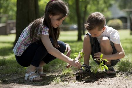 plantando arbol: Niños plantando un árbol nuevo. Concepto: lifew nuevo, la conservación del medio ambiente