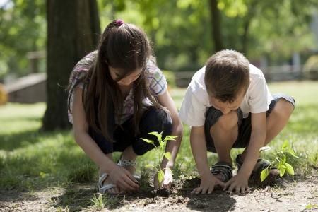 niños jugando en el parque: Niños plantando un árbol nuevo. Concepto: lifew nuevo, la conservación del medio ambiente