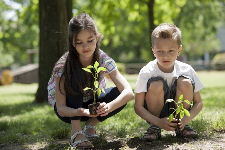planting a tree: Children planting a new tree. Concept: new lifew, environmental conservation