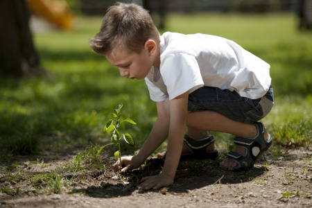 planting a tree: Little boy planting Stock Photo