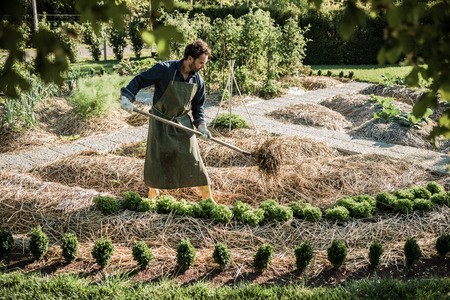 straw: Man working on a synergistic vegetable garden