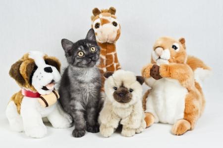 Funny little Cat among Cuddly Toys Banco de Imagens