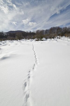 Footprints on the snow, in the direction af a wood, in central Italy Banco de Imagens