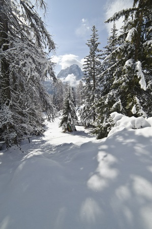 Snow Climbing through a forrest in the Dolomites