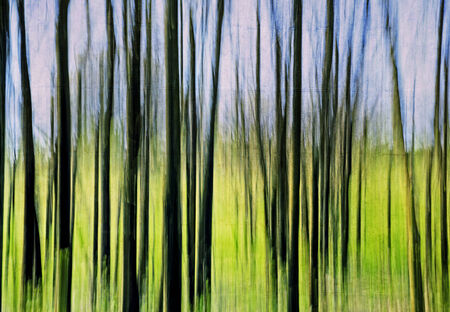 front or back yard: Abstract painting lawn and wood artistic