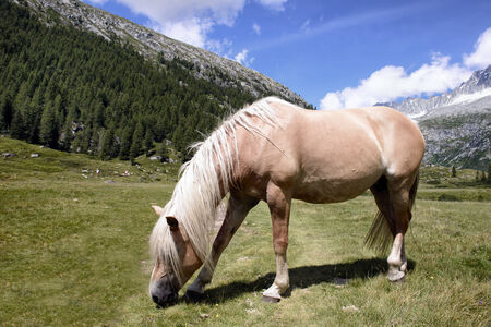 Horse Grazing Landscape mountains in Italy Trentino Dolomites photo