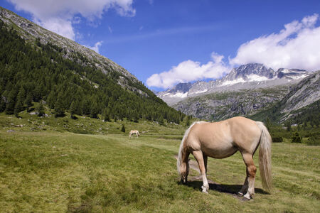 Horses Grazing Landscape mountains in Italy Trentino Dolomites photo