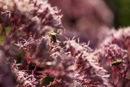 bee on pink flowers