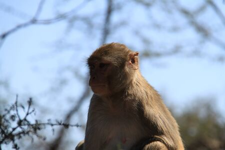 India, baboons along the way