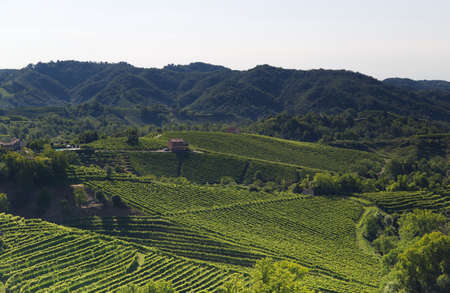 View of the hills of Prosecco vineyards in the Conegliano countryside. High quality photo