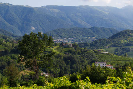 View of the hills of Prosecco vineyards in the Conegliano countryside 写真素材 - 151075809