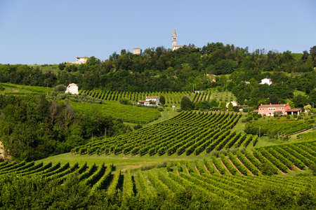 View of the hills of Prosecco vineyards in the Conegliano countryside