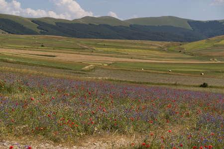 The plateau of Castelluccio in UMBRIA, Italy Фото со стока