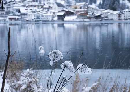 The lake Imagens