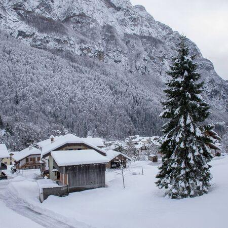 Snow-covered fir