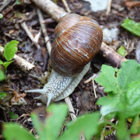 The snail with the broken cottage