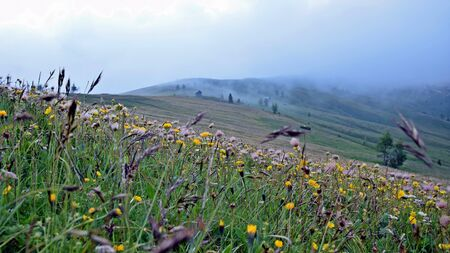 Flowery field Imagens