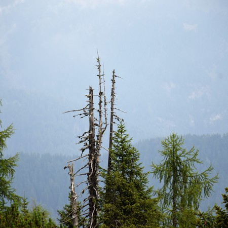 The beauty of the larch Imagens