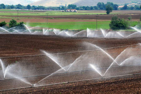 irrigation field: irrigation of agricultural field