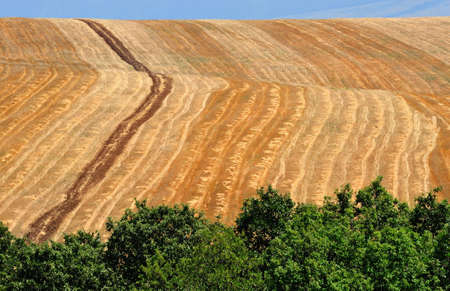arable land: landscape of arable land